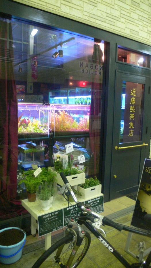 「近藤熱帯魚店」でハイボール_c0061686_8144798.jpg