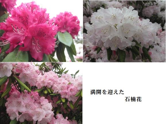 f0110488_075285.jpg