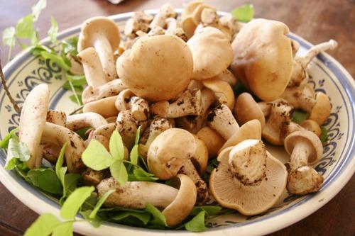 キノコの食べ方~菌の話_f0106597_0423793.jpg
