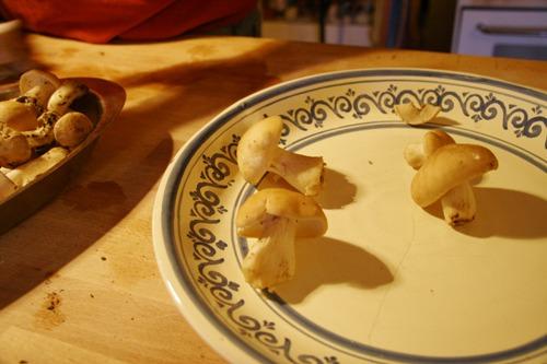 キノコの食べ方~菌の話_f0106597_046914.jpg