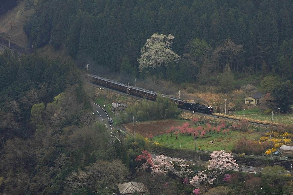 桜色と黄色と黒い機関車と赤い客車 - 2012年・秩父 -_b0190710_233254.jpg