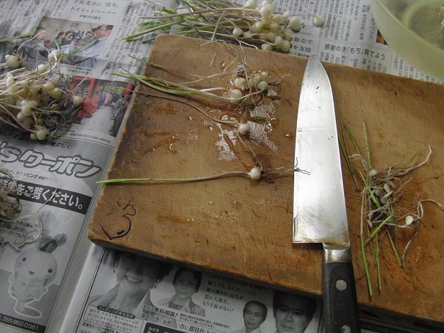 この時期ならではの味 「ノンビル」(ノビルが本当?)_f0141310_7502316.jpg