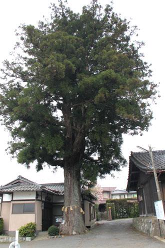 まいまい京都 大原あるき_e0048413_22336100.jpg