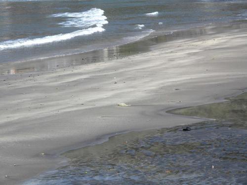 秋谷海岸 散歩_d0150720_6401862.jpg