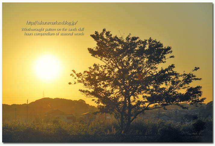 夕焼け空と葉桜。_f0235723_20275311.jpg