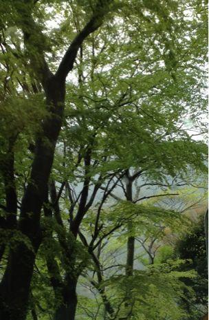 緑のトンネル_b0099226_0292156.jpg