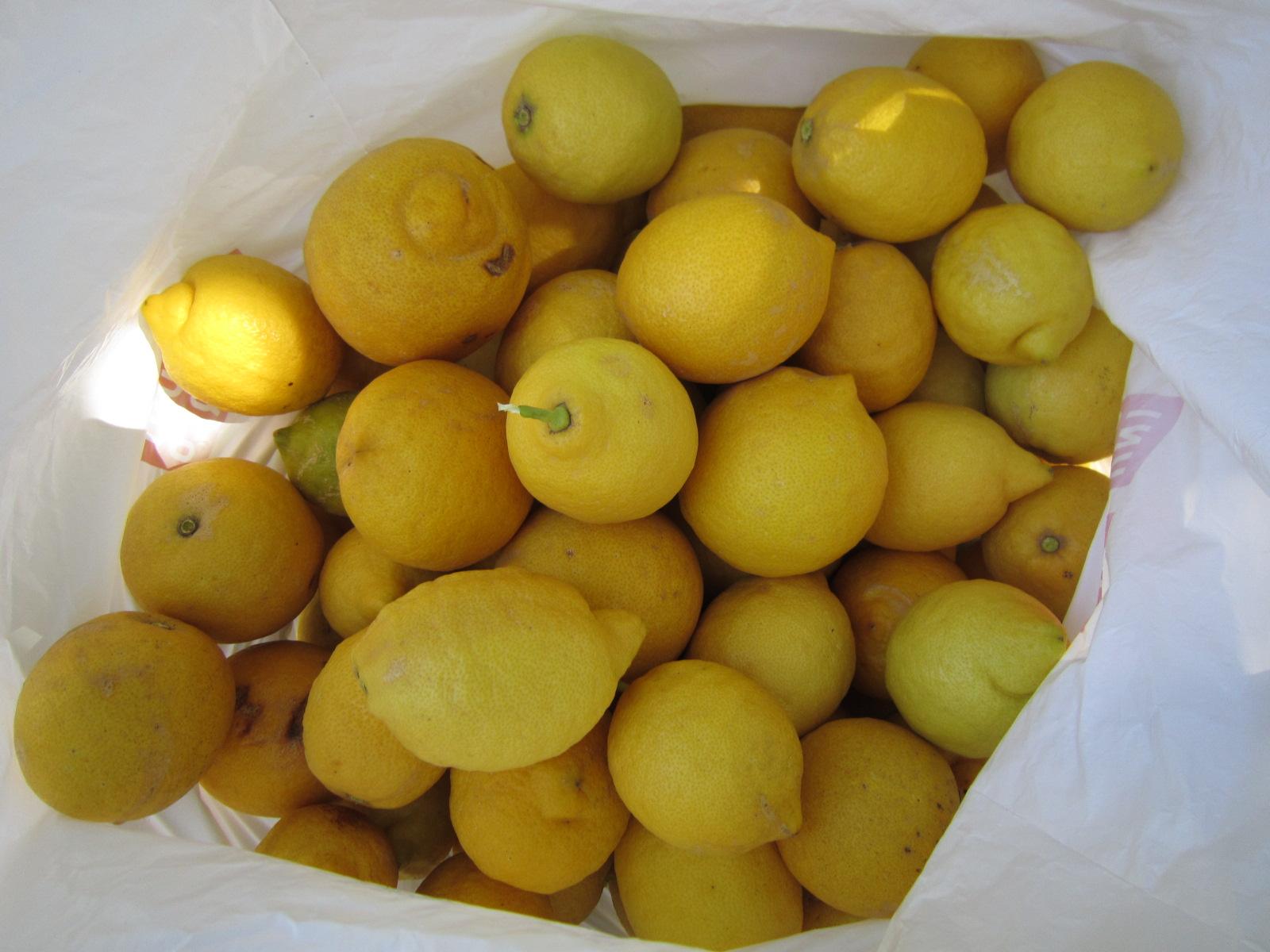レモン狩り バゥ_d0084229_015588.jpg