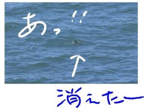 b0165336_1571874.jpg