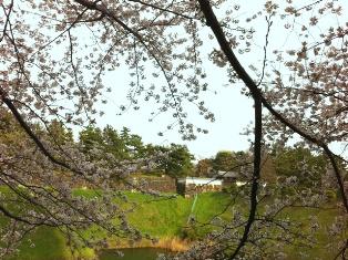 2012年の桜_f0214437_4121391.jpg