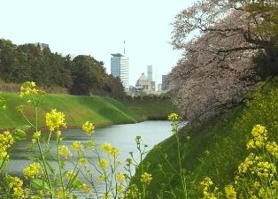 2012年の桜_f0214437_4135886.jpg