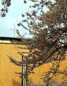 2012年の桜_f0214437_416563.jpg