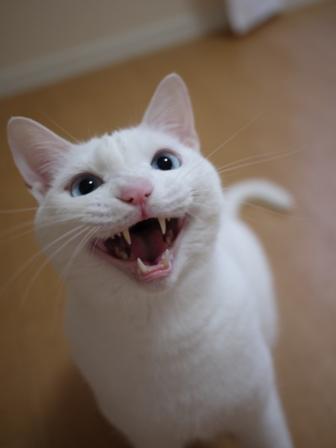 猫のお友だち vieくん編。_a0143140_23135174.jpg