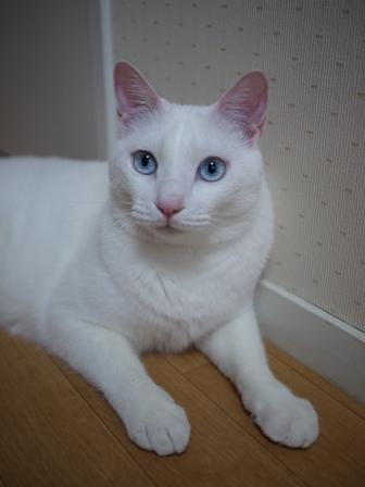 猫のお友だち vieくん編。_a0143140_2319127.jpg