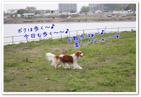 d0013149_113365.jpg