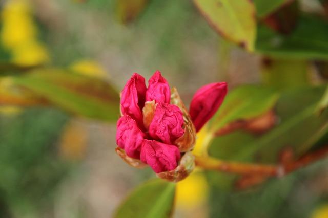 増富に花がいっぱい咲いた・・・_b0100253_11511168.jpg