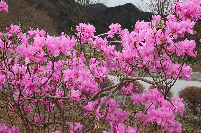 増富に花がいっぱい咲いた・・・_b0100253_11525642.jpg