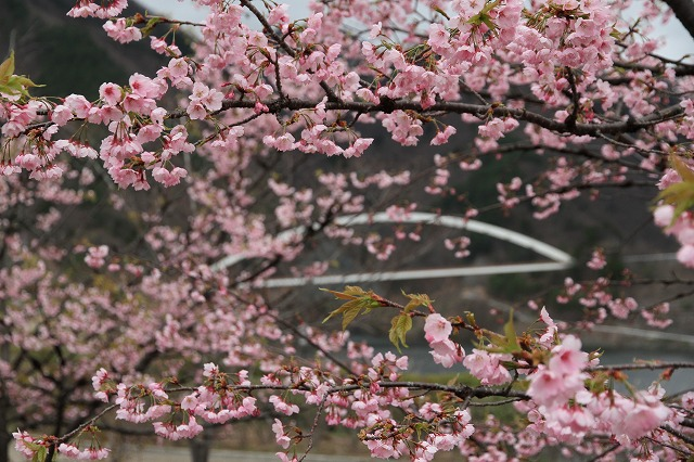 増富に花がいっぱい咲いた・・・_b0100253_11553891.jpg