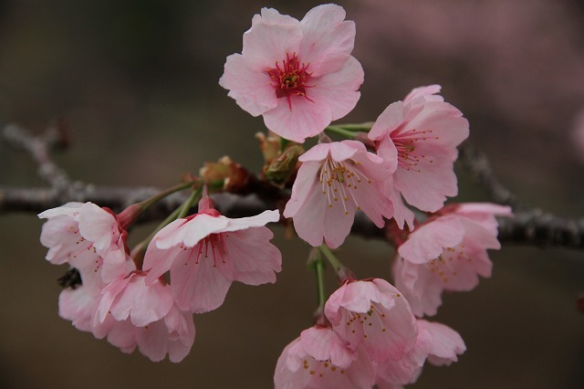 増富に花がいっぱい咲いた・・・_b0100253_11562162.jpg
