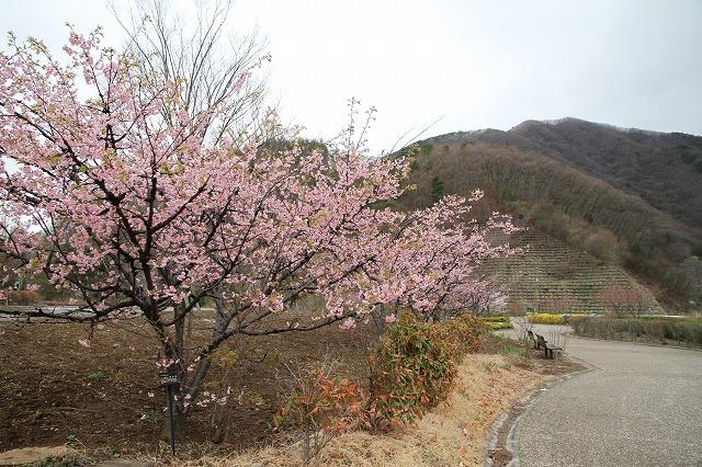 増富に花がいっぱい咲いた・・・_b0100253_11574081.jpg