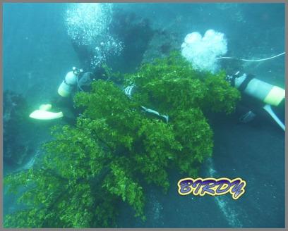 大久保 アオリイカの漁礁設置_e0273365_18225120.jpg