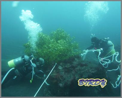 大久保 アオリイカの漁礁設置_e0273365_1823131.jpg
