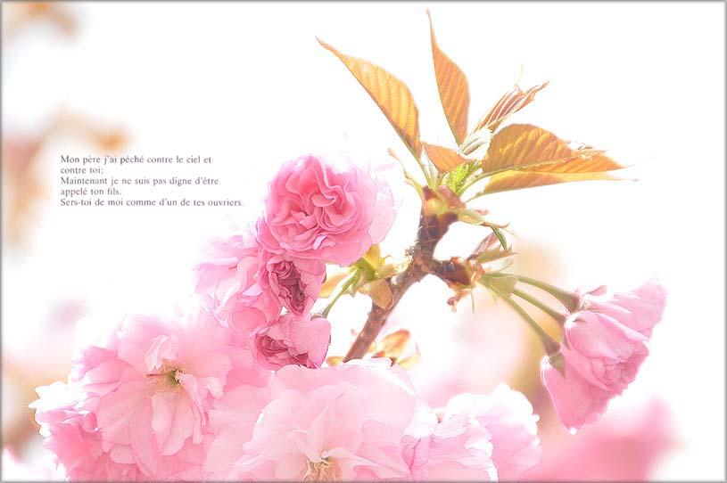 f0198771_04610.jpg