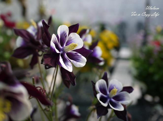 面白い形の花びら_a0262573_7341865.jpg