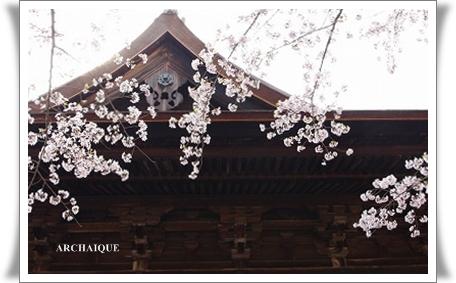 ゚・*:.。. .。.:*・゜今年の桜゚・*:.。. .。.:*・゜_c0207890_0351471.jpg