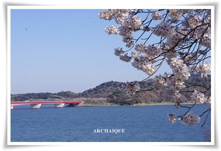 ゚・*:.。. .。.:*・゜今年の桜゚・*:.。. .。.:*・゜_c0207890_0353832.jpg