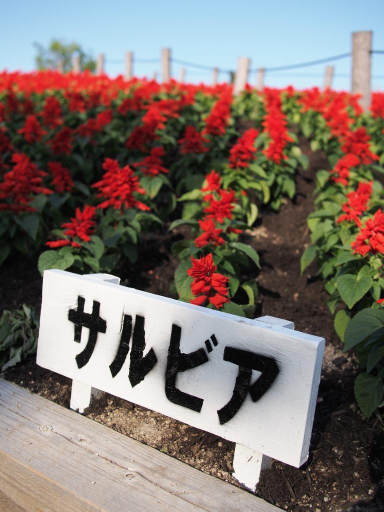「天気の良い日は鶴見緑地」_a0133692_2172422.jpg