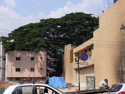 インド出張2012年04月-第二日目-インドで地ビール_c0153302_11293265.jpg