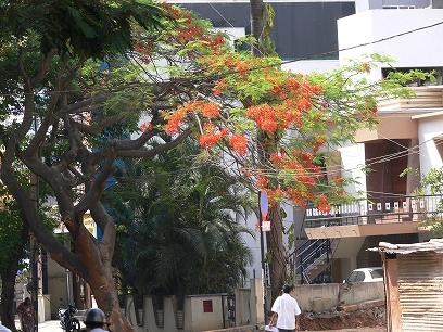 インド出張2012年04月-第二日目-インドで地ビール_c0153302_1130875.jpg