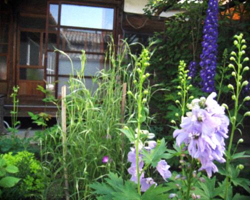 オーガニックな春の庭を囲む古民家暮らし。_d0077603_911435.jpg