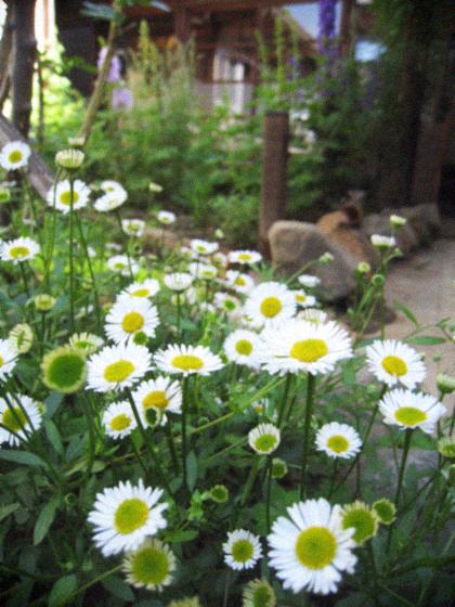 オーガニックな春の庭を囲む古民家暮らし。_d0077603_932541.jpg