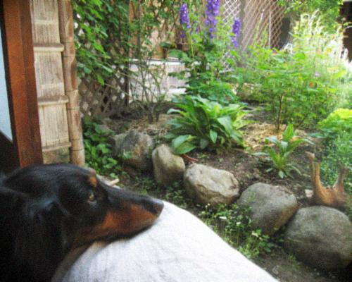 オーガニックな春の庭を囲む古民家暮らし。_d0077603_935024.jpg