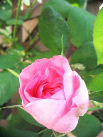 オーガニックな春の庭を囲む古民家暮らし。_d0077603_981298.jpg