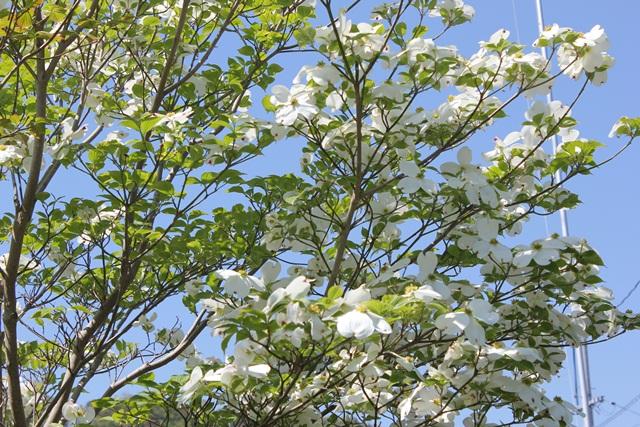 わが家の周りの春☆ 第2弾(^_-)-☆そして父の藤_a0213806_10574627.jpg