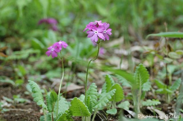自然教育園四月下旬の花_f0012718_0582040.jpg