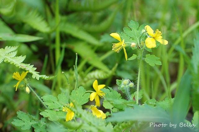 自然教育園四月下旬の花_f0012718_0584722.jpg