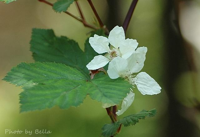 自然教育園四月下旬の花_f0012718_181721.jpg