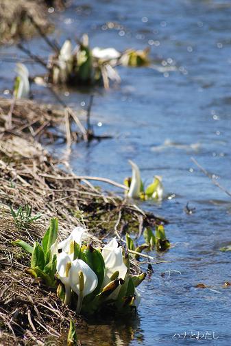 春の花_e0120026_8481022.jpg
