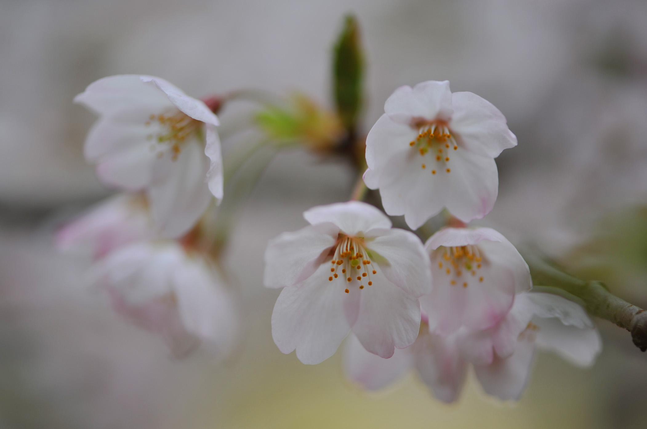 栗林公園の桜_d0246136_23233661.jpg