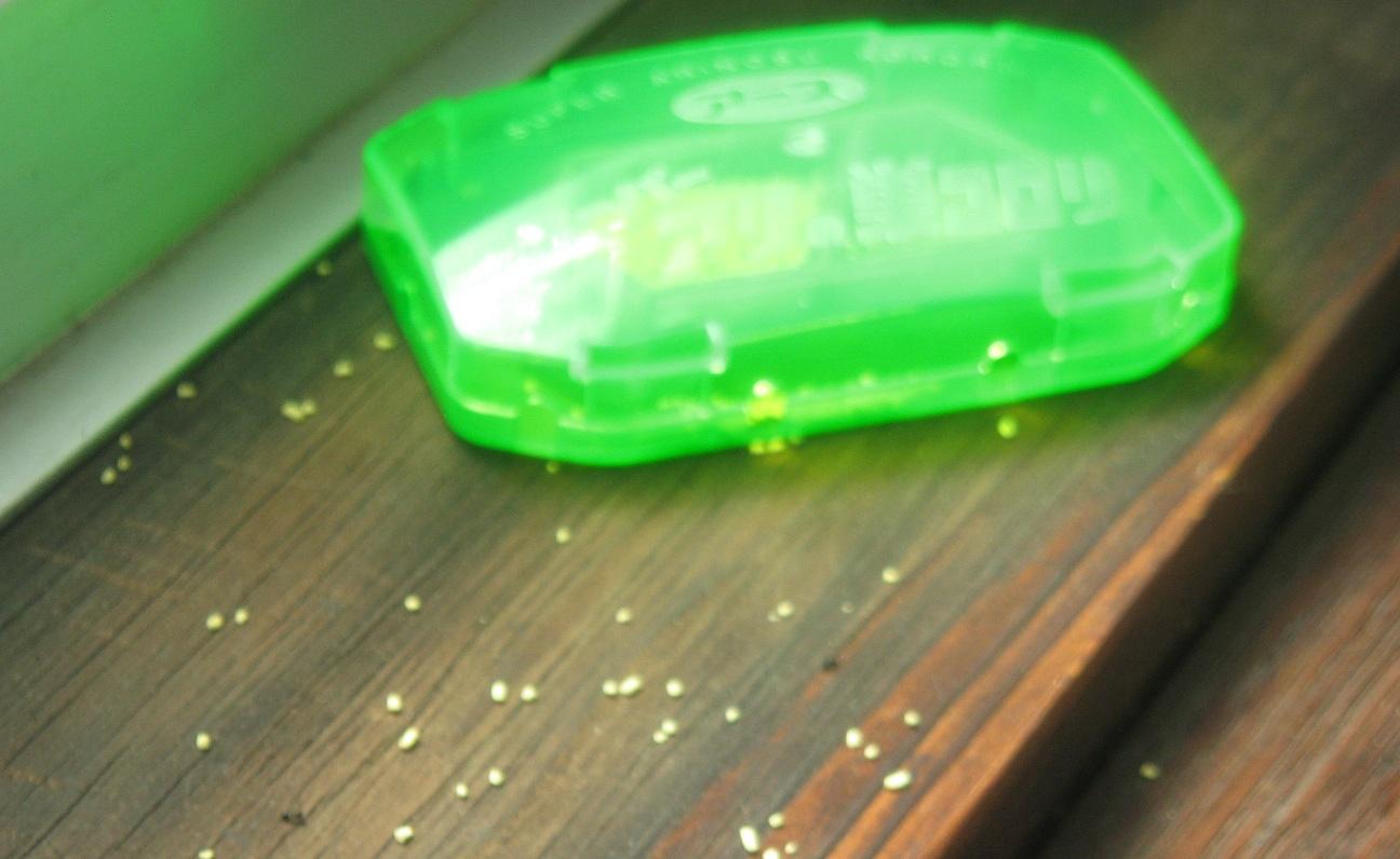 巣 スーパー コロリ の アリ