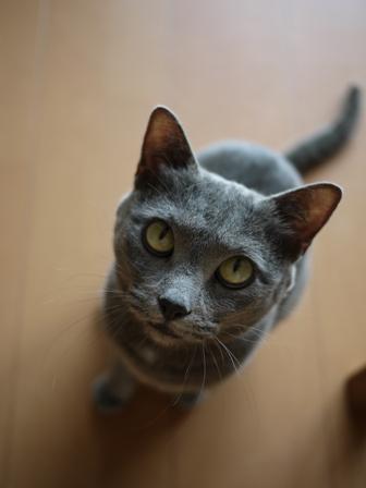 猫のお友だち 銀くん編。_a0143140_19273149.jpg