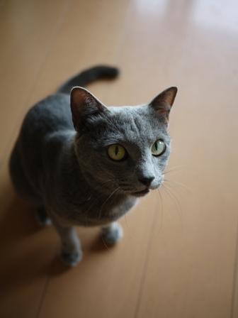 猫のお友だち 銀くん編。_a0143140_1928590.jpg