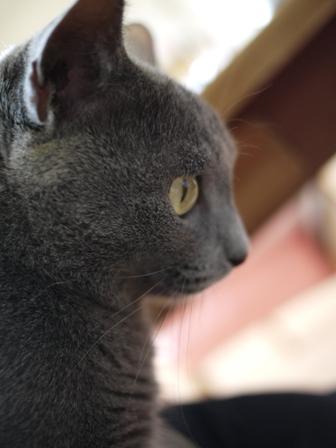 猫のお友だち 銀くん編。_a0143140_19291611.jpg