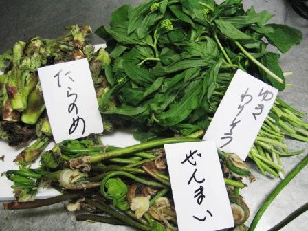 魚・山菜_c0206545_1051096.jpg