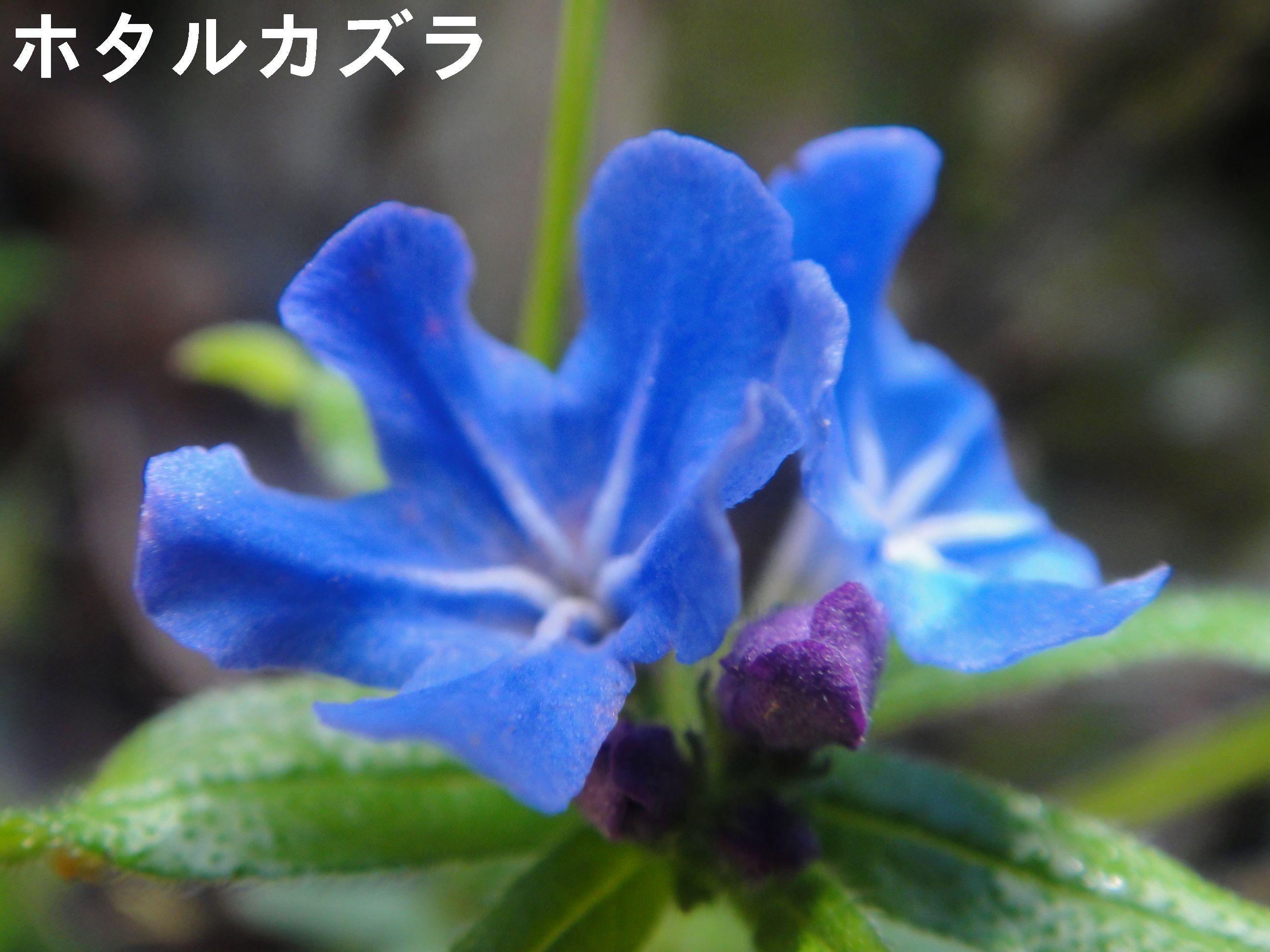 平成23年度定期総会 in 孝子の森_c0108460_221349100.jpg