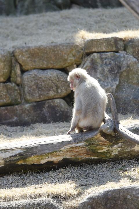 佇む 【東山動物園 April 2012】_d0108063_17402183.jpg