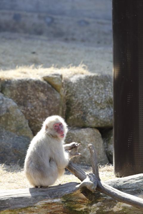 佇む 【東山動物園 April 2012】_d0108063_1740496.jpg